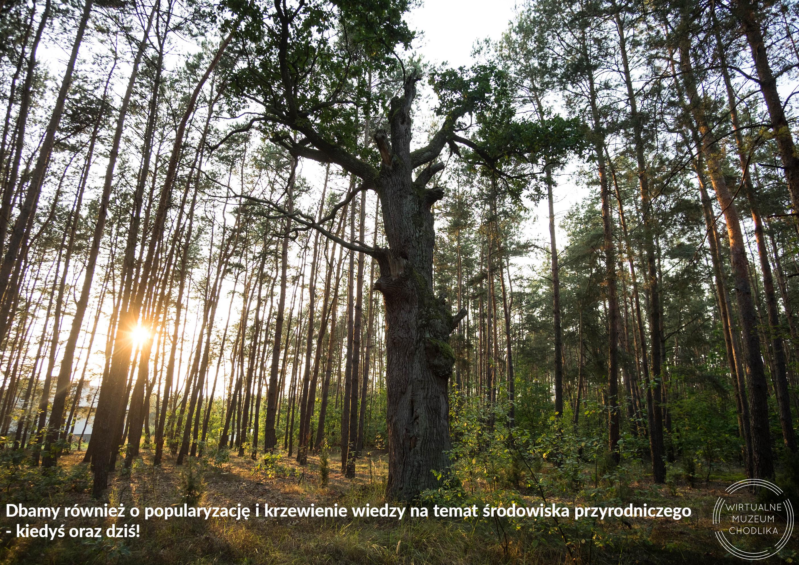 archeologia-lasow-kotliny-chodelskiej18